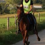 Quehlen de Tourtel Ecurie d'endurance Haras du Don (1)