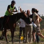 Quehlen de Tourtel Ecurie d'endurance Haras du Don (2)